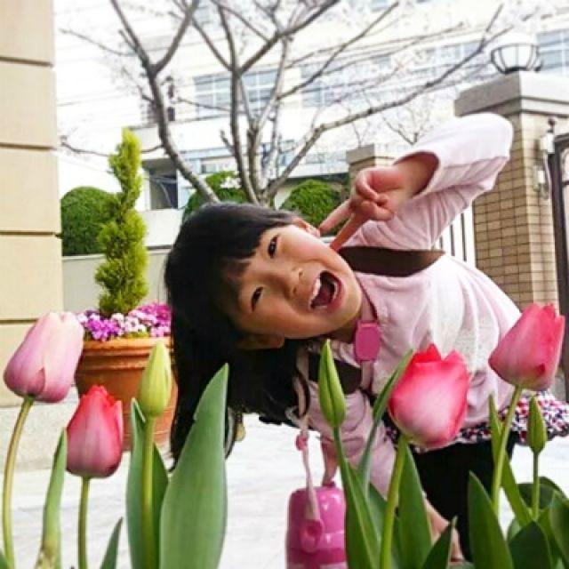第5回 Let's1128 チューリップ写真コンテスト! 4月30日まで写真募集中☆