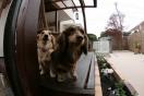 ペットと暮らすガーデン工事