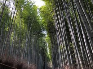 竹林 京都