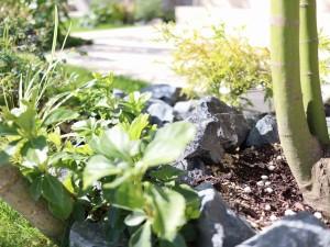 栗石 植栽