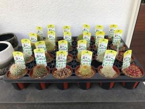 グランド工房相模原店 植物 サボテン 多肉植物